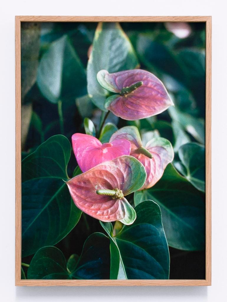 Talisa Lallai - Flamingo flowers, 2019